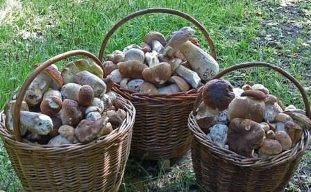 Друзі збирали гриби