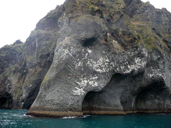 Морський слон в Исландіі